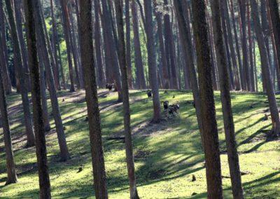 naturwildpark006-min