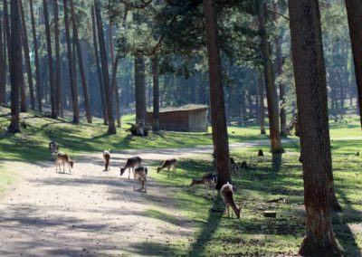 naturwildpark008-min