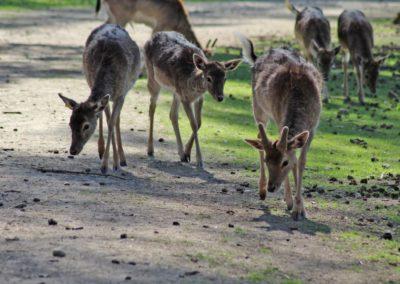 naturwildpark009-min