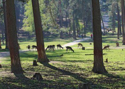 naturwildpark011-min