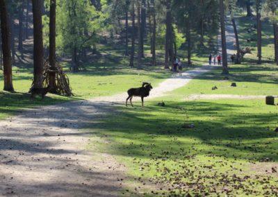 naturwildpark012-min