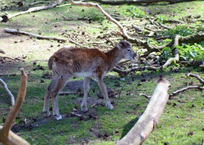 naturwildpark015-min