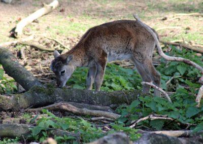 naturwildpark018-min
