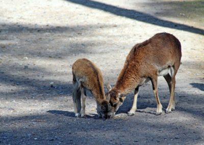 naturwildpark019-min