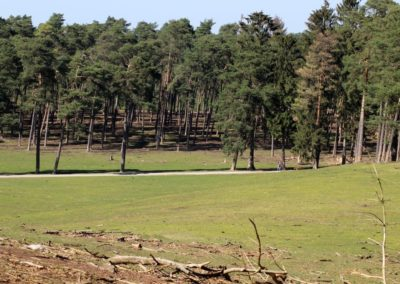 naturwildpark020-min