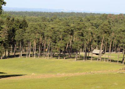 naturwildpark022-min