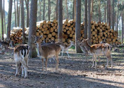 naturwildpark025-min