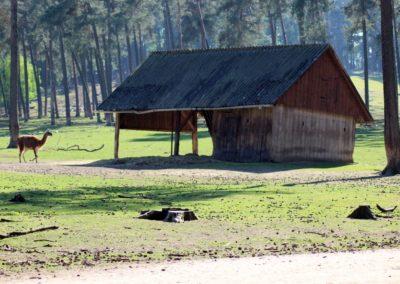 naturwildpark026-min