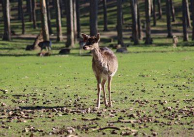 naturwildpark028-min