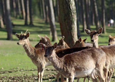 naturwildpark030-min