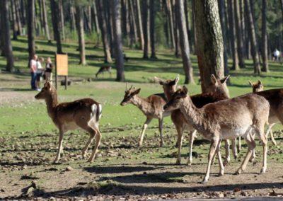 naturwildpark031-min