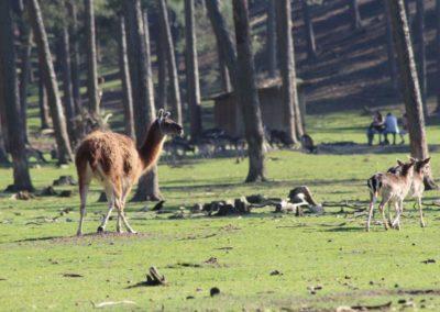 naturwildpark033-min