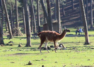 naturwildpark034-min